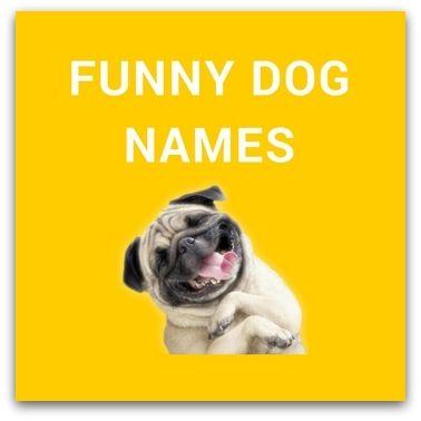funny dog names - 378×378