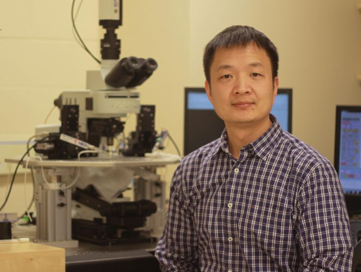 """Geng-Lin Li, biology, recently was awarded a five-year, $1.6 million grant by the National Institutes of Health to study auditory signal processing in the inner ear. His findings will expand basic understanding of hearing and could lead to better hearing protection. He says, """"Our inner ear can..."""