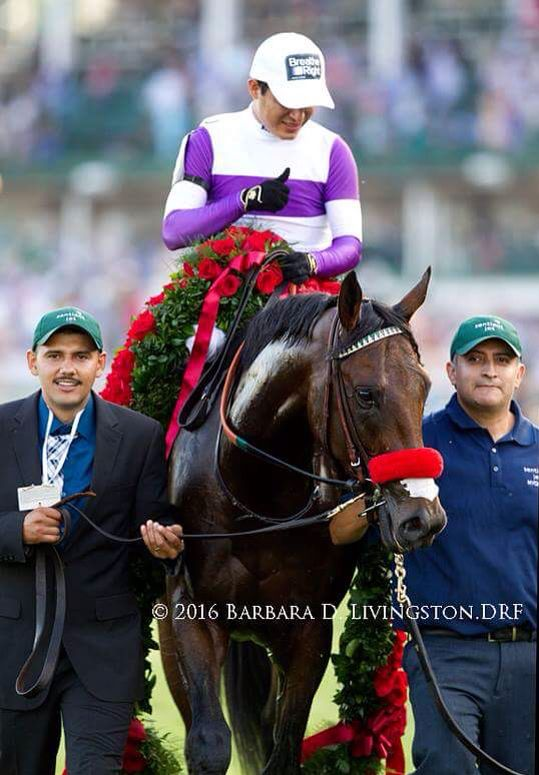 216 best Racehorses images on Pinterest | Horse racing ...