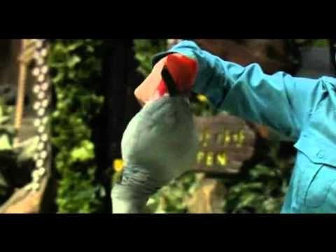 #Vídeo: el #loro que imita más de 50 sonidos ¡Increíble!  #Animales #Curiosidades #Naturaleza