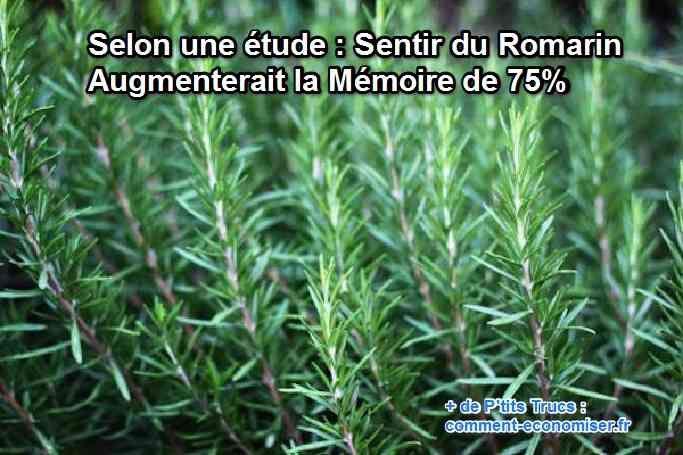 Le romarin a été utilisé en médecine traditionnelle dès l'Antiquité. Mais voici qu'une nouvelle étude nous révèle des choses intéressantes concernant le romarin.  Découvrez l'astuce ici : http://www.comment-economiser.fr/augmenter-memoire-en-sentant-romarin-.html?utm_content=buffer566e2&utm_medium=social&utm_source=pinterest.com&utm_campaign=buffer