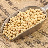 Organic Soya Beans ( kacang kedelai )