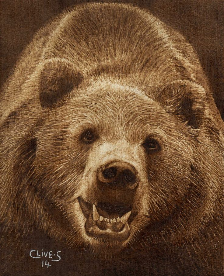 Brown Bear Pyrography On Paper Clive Smith Pyrography