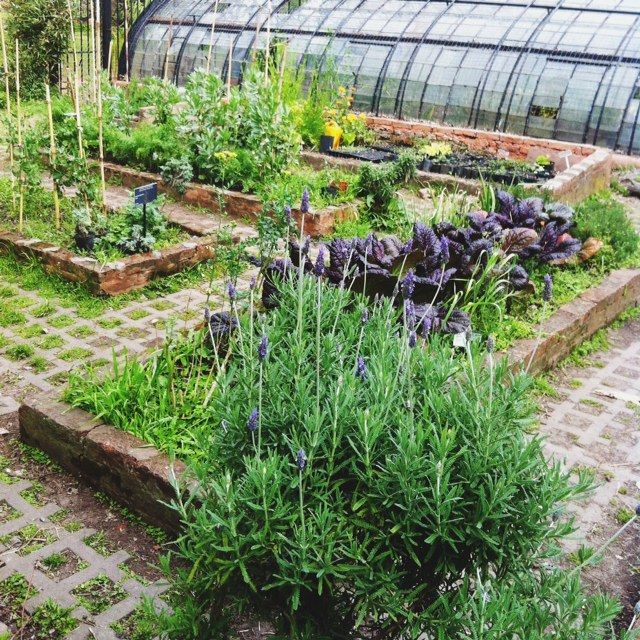 65 Best Potager Gardens Images On Pinterest: 17 Best Images About Garden Potager Boxes, Fences On