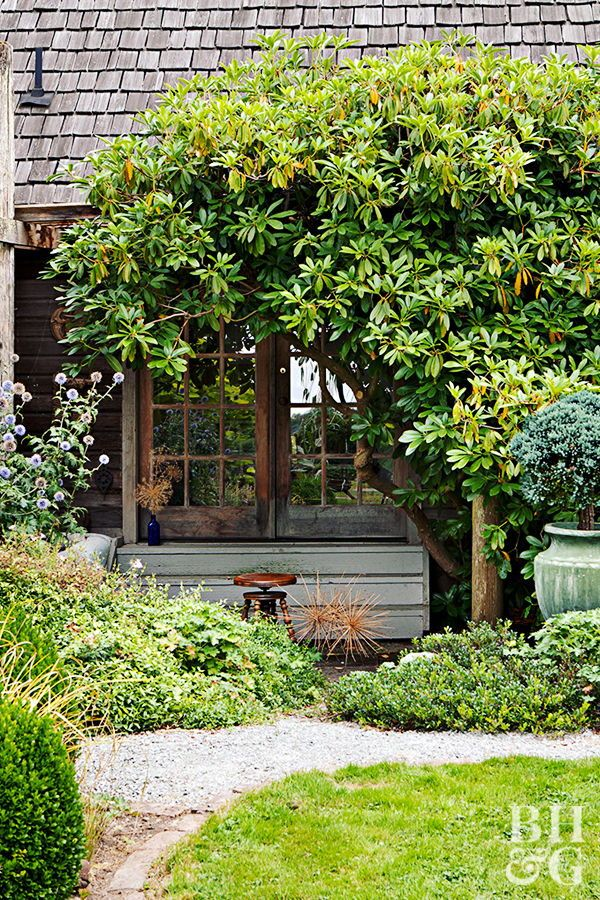 These Fast-Growing Trees Naturally Boost Privacy in Your ...