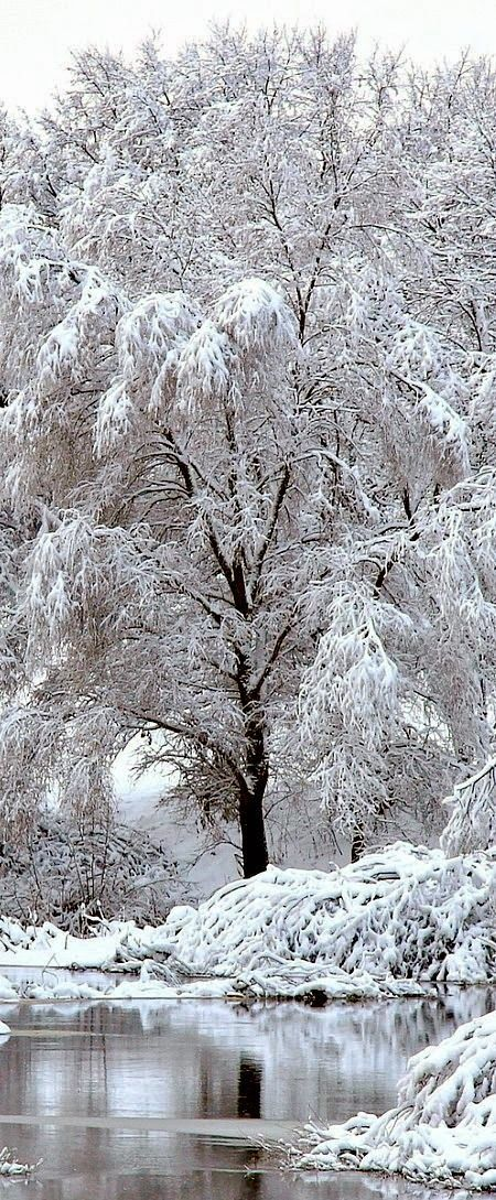 snow photography ~ Dreamy Nature