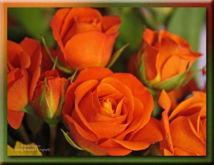 184 best orange flowers images on pinterest orange roses for The meaning of orange roses