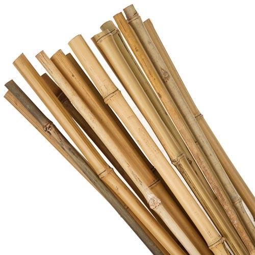 3ft Bamboo Cane 20 Pack | Poundland