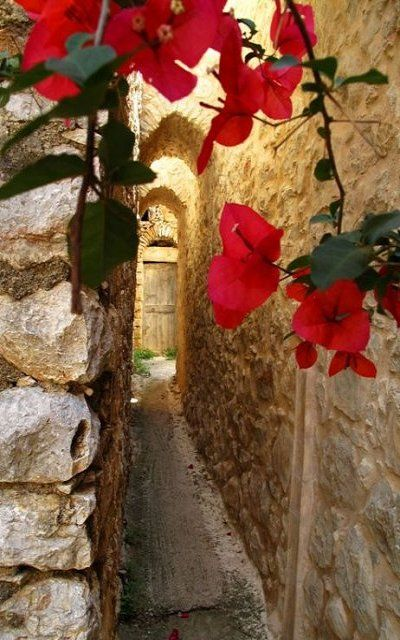 Bougainvilles in #Armolia medieval village, #Chios Island, Greece