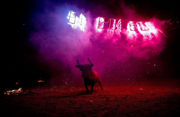 Il Toro de Jubilo – Il Festival del toro infuocato | 4Gaia – Madre Terra