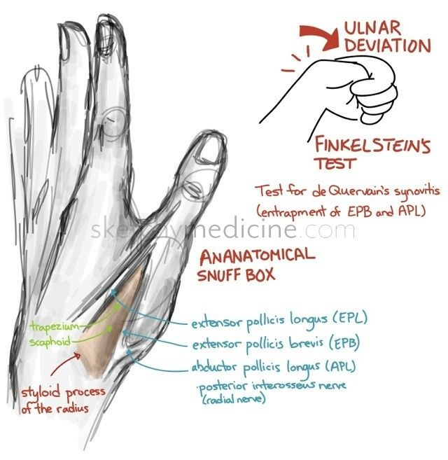 The anatomical snuff box is among one of the most fun-named anatomic structures, it's called the snuff box because people used to put snuff (tobacco) in it. If you have dinky little hands like me, ...