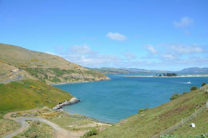 #Dunedin #Otago #NewZealand. If you like our photos, like us on FB www.facebook.com/trendstravel #dunedin #otagopeninsula #otagobay #NewZealand