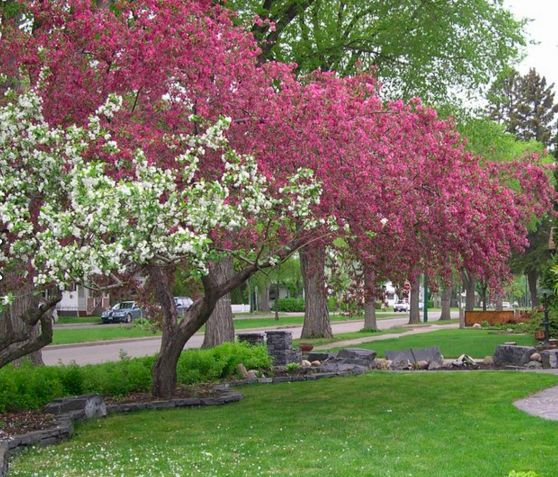 Spring Landscaping Tips 47 best images about spring landscaping tips saskatchewan on