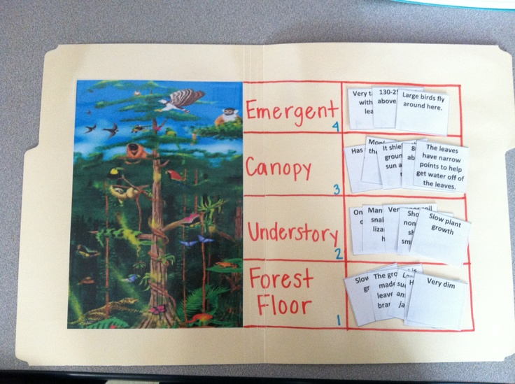"""1.This is a geography social studies work job, """"This Place is Wet"""" is a file folder game in which students identify characteristics of each layer of the rainforest. 2. I made this by finding a picture of the rainforest, labeling each layer of the rainforest, and creating facts cards for each layer. 3. This is best for 2nd grade because of the reading level required for each card and the more in depth knowledge of a rainforest habitat."""