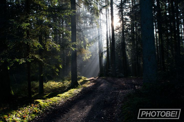 Sunrise through the trees, Photography, Sun, Sunlight, Forest, nature – Die ersten Sonnenstrahlen des Tages blitzen durch die Bäume, Fotografie, Wald…