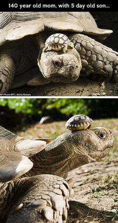 We don't grasp the time scale that tortoises live in.