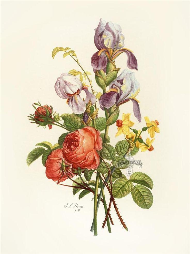 ботанические рисунки растений открытки теле ребёнка