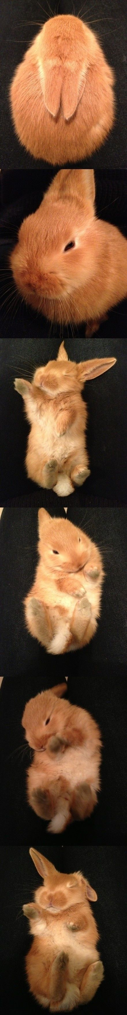 Cute little bunny, you have to love.