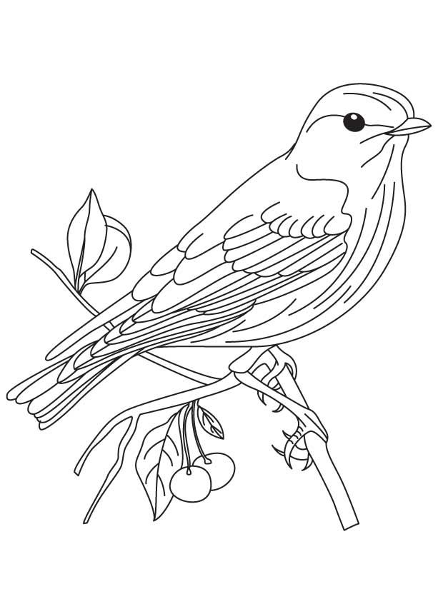 Eastern bluebird coloring page