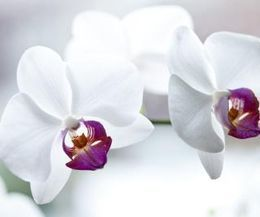 The two-week period before Mother's Day sees price increases for spring flowers, especially for miniature roses, orchids, snapdragons and lilies. However, bargains are still available for cornflower, chrysanthemums, carnations, alstroemeria and tulips. After Mother's Day, you can get good deals on snapdragons and lilies. In June, avoid the white flowers most often used in weddings, such as white roses, calla lilies, orchids and baby's breath.