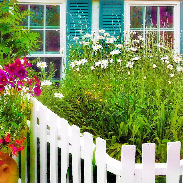White Picket Fence With Daisies .