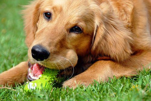 Haz tú mismo juguetes para tu perro. ¡Le van a encantar! - Mis animales