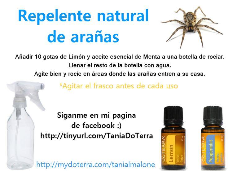 Sabían que las arañas odian la menta? Aquí esta un buen repelente para desaparecer las de su casa :)
