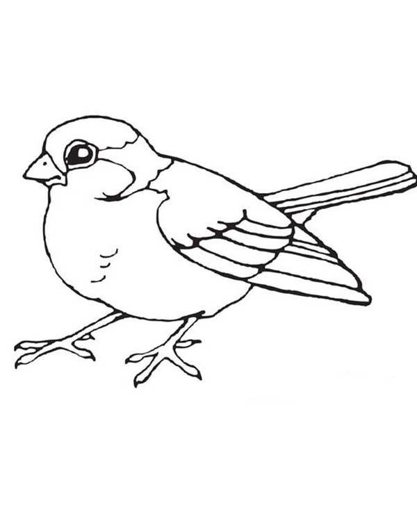 Sparrow Bird Sparrow Bird Coloring Page Is Part Of Bird Coloring