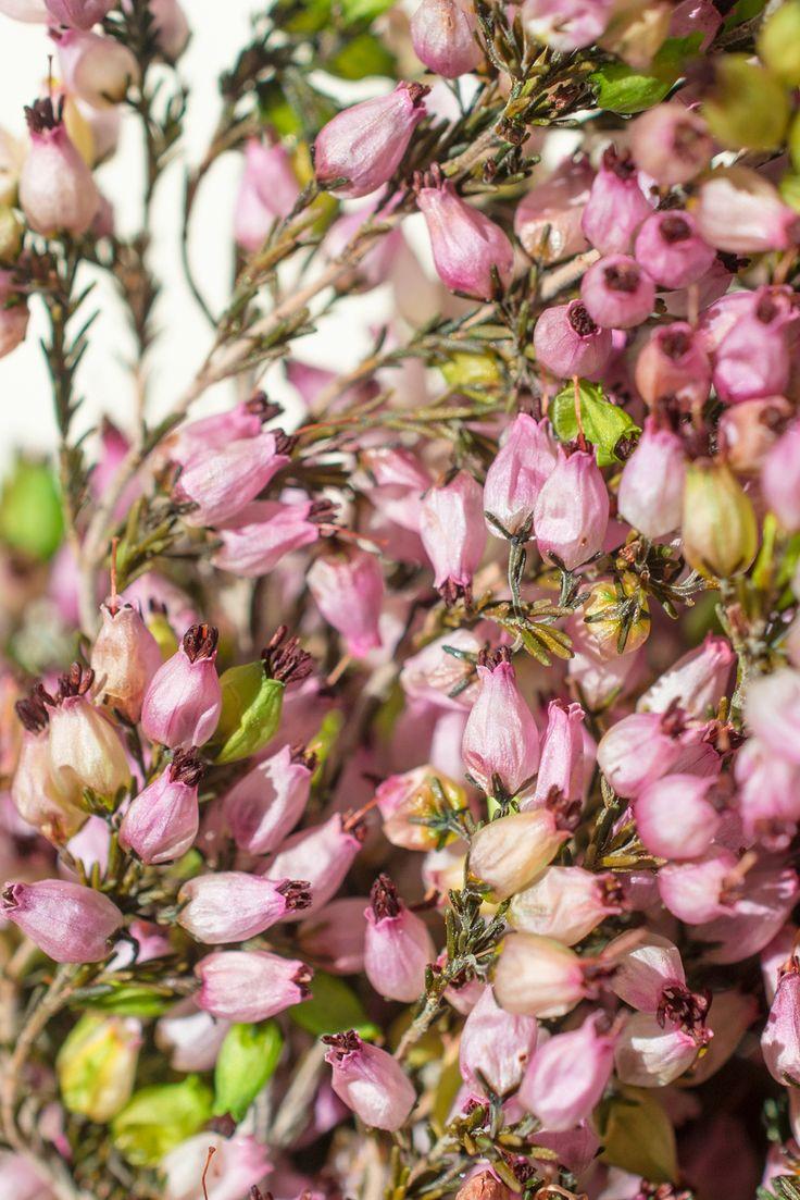 127 best Natural Inspiration images on Pinterest   Sola flowers ...