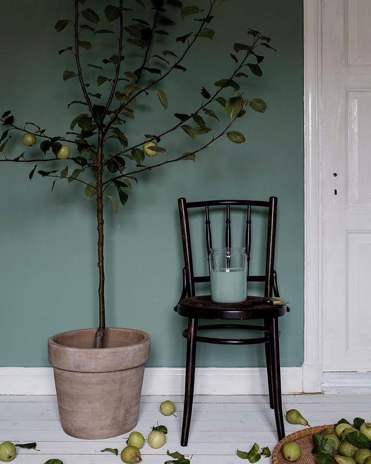 Våra ekologiska väggfärger från Auro, inspirerande tolkade av stylist Elin Lannsjö. På sin blogg berättar Elin mer om sina tankar kring stylingen.  Kulör: Jade, nr. 863  Stylist: @elinlannsjo  Foto: @alicej.se  #aurosverige #jade #väggfärg