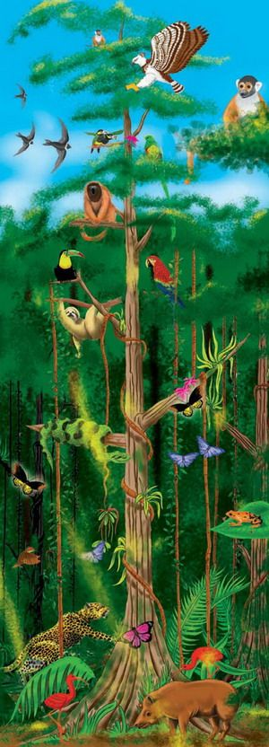 This large Rainforest puzzle brings the colors and creatures of the rainforest to life. Our Rainforest Layers puzzles, which graphically illustrates the four layers of the rainforest, contains 100 pieces and stands 4 feet tall! All pieces are extra sturdy to withstand the frequent handling of kids 5 and up.