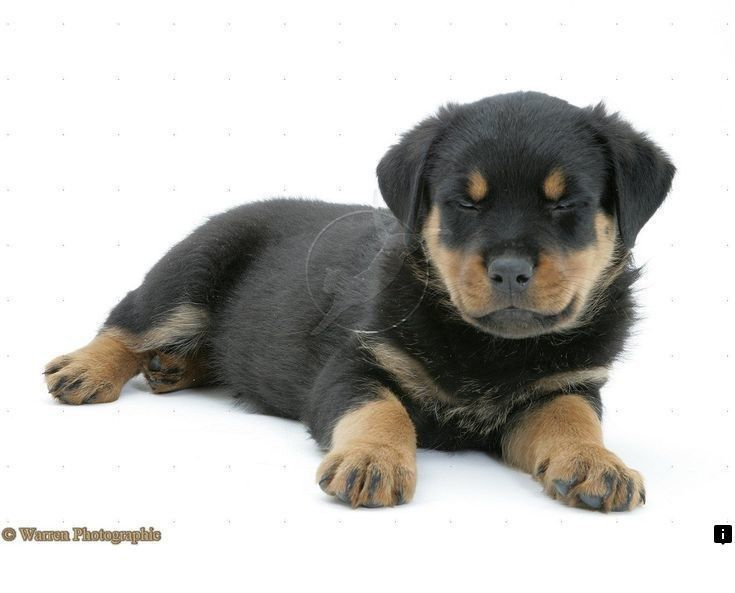 Visit The Webpage To Read More About Yellow Lab Puppies Click The