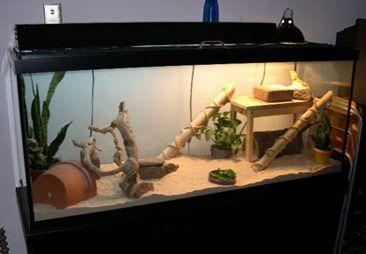DIY Bamboo Dragon Ramp - super easy ramp to make and it looks great! PetDIYs.com