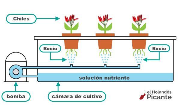 Diagrama de sistema aeropónico para chiles
