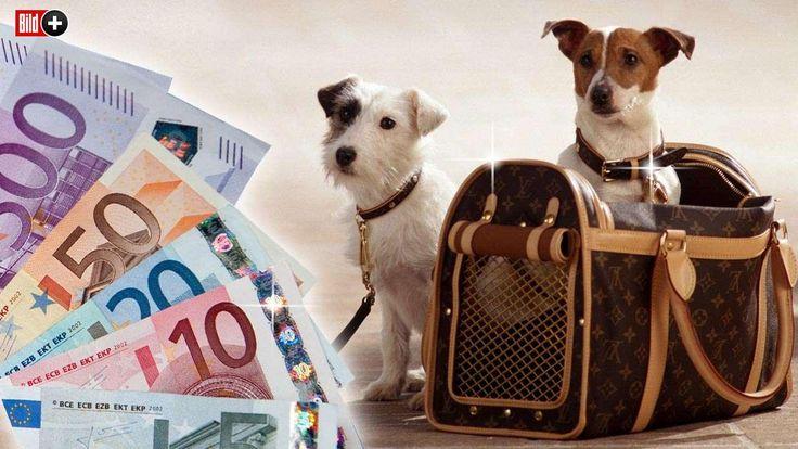 HUNDESTEUER IST EINE LUXUSSTEUER Kann ich mir noch einen Hund leisten? Teil 3 der BILD-Hundesteuer-Serie