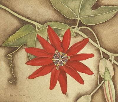 Rita Angus Passionflower, 1943 Watercolour Museum of New Zealand Te Papa Tongarewa