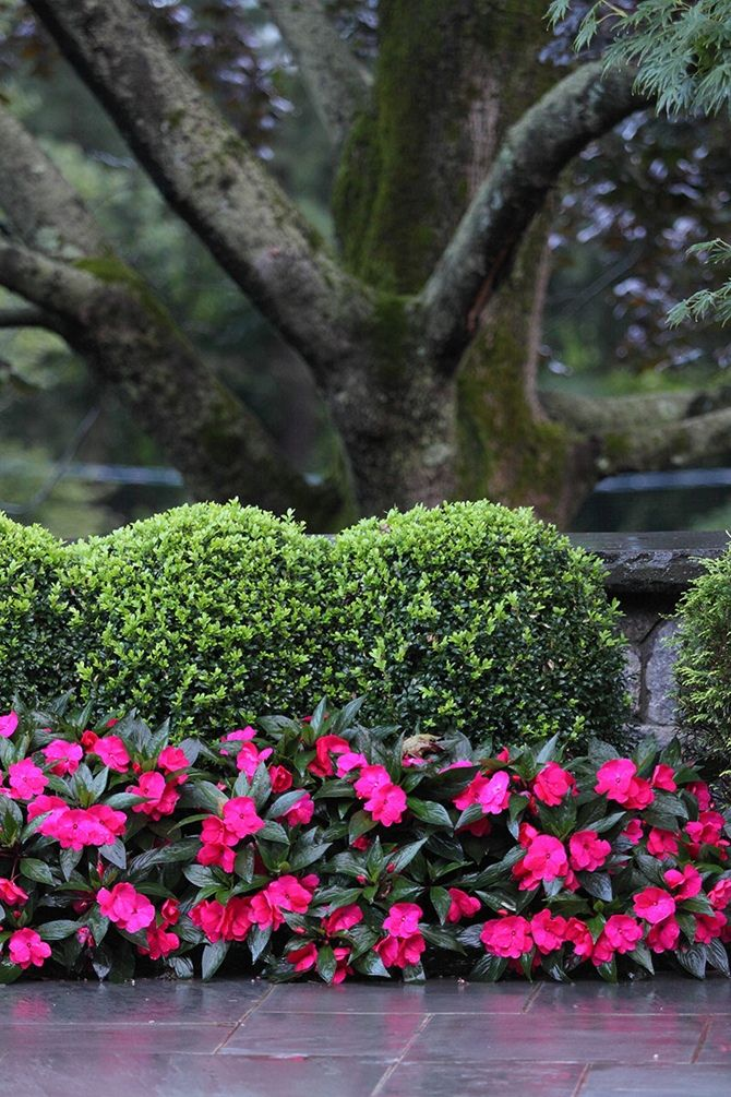 189 Best Images About Flores