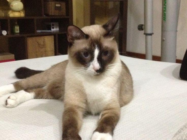 new litter box cat wont use