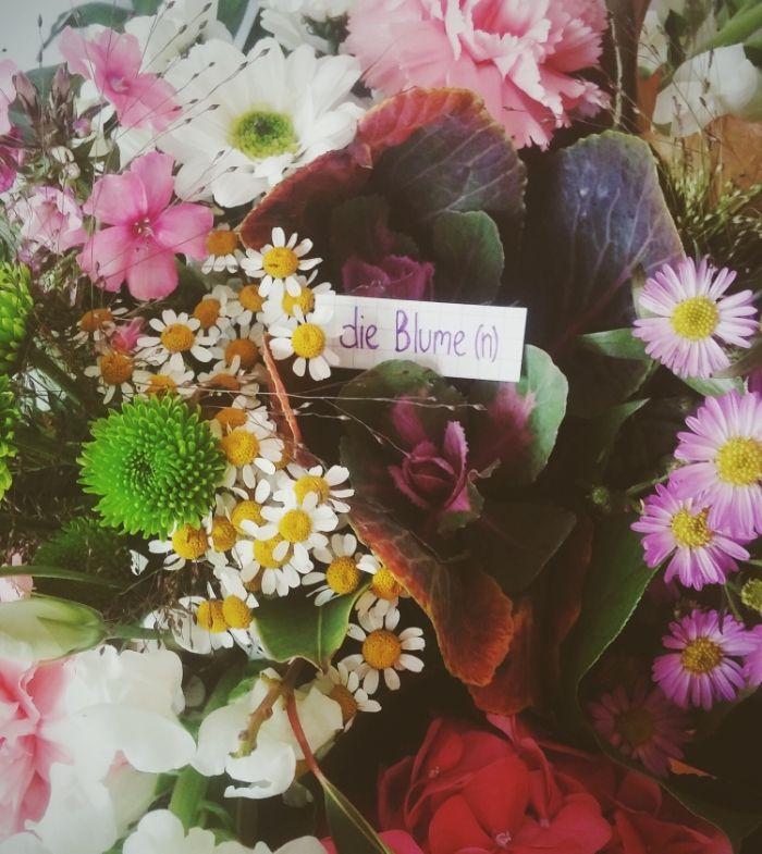 die Blume - flower