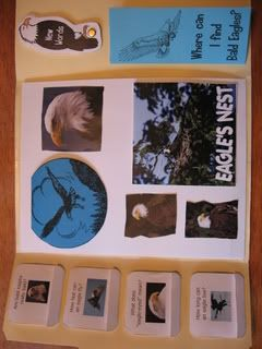 Bald Eagle lapbook and unit study