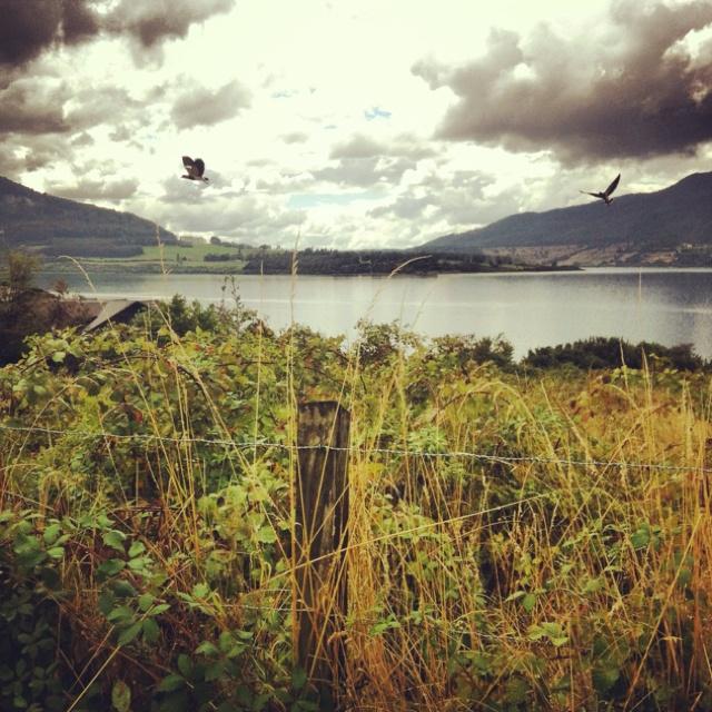 Lago Riñihue