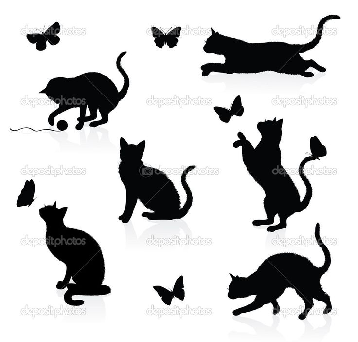 Ombre chat