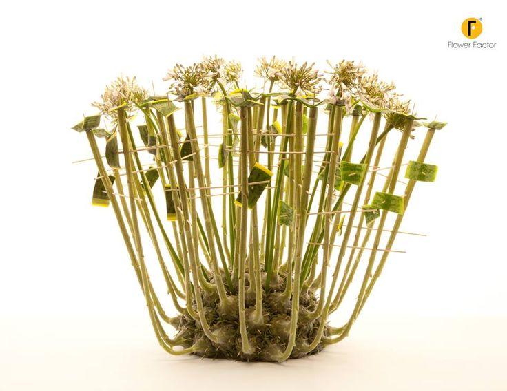 Beautiful Helianthus by Flower Factor