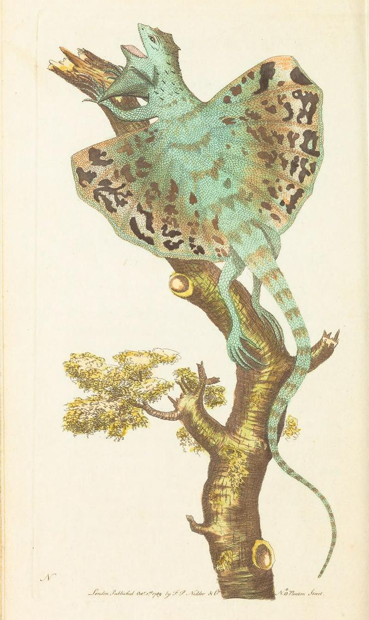 1791 v.1 The naturalist's miscellany, or Coloured