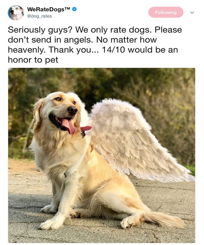 Funny Dogs Pictures From Twitter