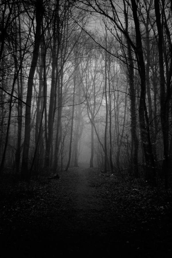 Dark Trees: Photos by MonoStep