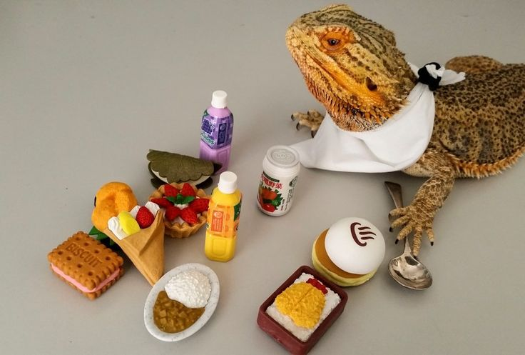 12 Pictures of Pringle, The Internet's Most Famous Bearded Dragon - TechEBlog