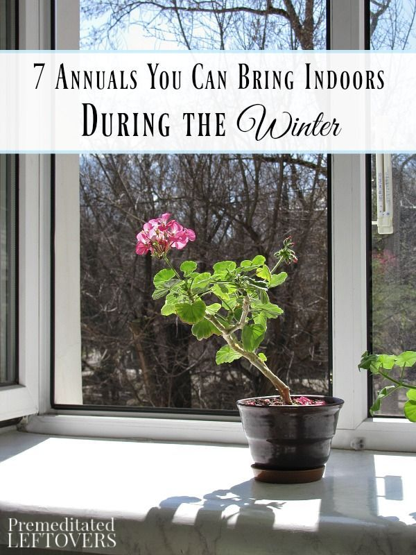 296 best Gardening Indoors images on Pinterest