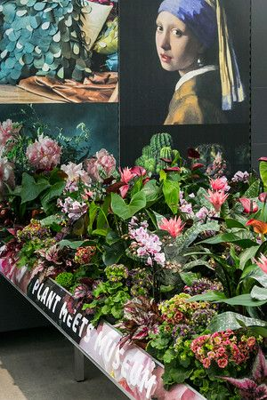 TRE 2016 - Garden Retail Experience Plant meets Museum with vintage Primula Pricanto