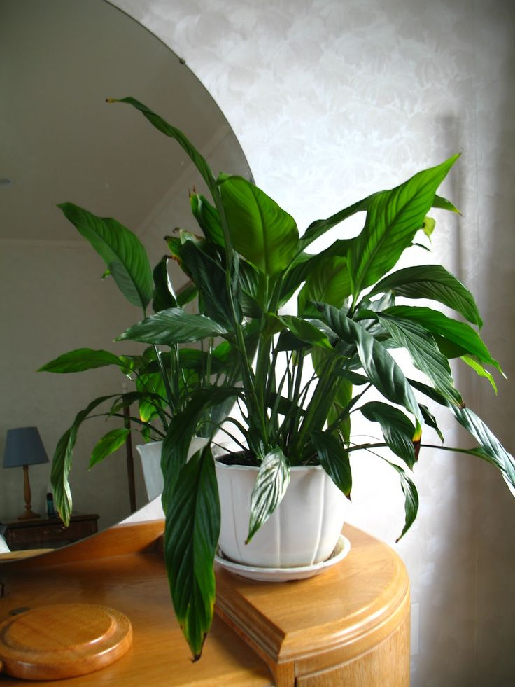 39 best images about gardens houseplants on pinterest for Indoor plants for better air quality